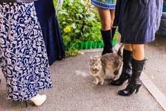 Stray cat walks. Stray fluffy cat walks near the people Stock Photo