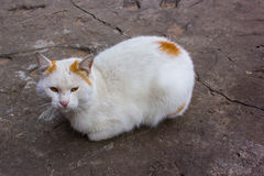 Stray cat was cold Royalty Free Stock Photo