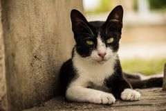 Stray cat was staring at us Stock Photography