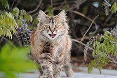 Stray Cat Stock Photos