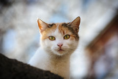 Stray cat Royalty Free Stock Image