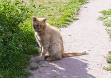 Stray cat. Cat who lives on the estate of a Russian diplomat and writer Griboyedov Stock Images