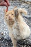 Stray Cats Stock Photos