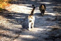 Stray cats coming near Royalty Free Stock Photography