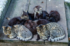 Stray cats family. Group of sitting cats and kitten Stock Photography