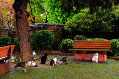 Stray cats in Istanbul Park. Stray cats in Mehmet Akif Ersoy park of Istanbul, near the Blue Mosque Stock Photography