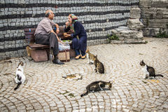 Stray cats in Istanbul,Turkey. Stray cats in Istanbul, near the Blue Mosque Royalty Free Stock Photography
