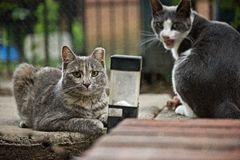Stray Cats life Royalty Free Stock Images