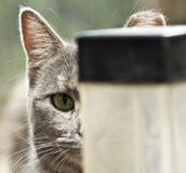 Stray Cats life Stock Images