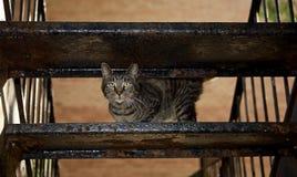 Stray Cats life Royalty Free Stock Photography
