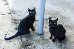 Stray cats. Looking focused and scared Stock Photos