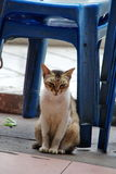 Stray cats. My home there, master abandoned me.Nobody loves me.Stray cats Stock Photography
