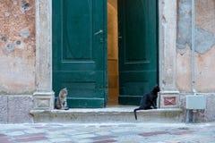Stray cats resting royalty free stock photos