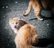 Stray cats. Royalty Free Stock Images