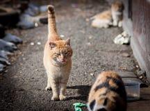 Stray cats. Stock Photography
