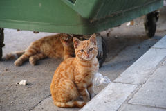Stray cats or street cats near garbage container Stock Image