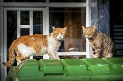 Stray cats in the street. Curiosity beats fighting stock photo
