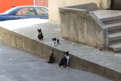 Stray cats. Walking next to a concrete wall Stock Photo