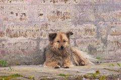 stray del cane immagine stock