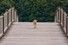 Free Stray Dog Royalty Free Stock Image - 11001586