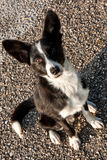 Stray Dog. Funny stray dog portrait in morning light Royalty Free Stock Image