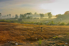 Stray Dog. Sitting in the countryside on a misty morning Royalty Free Stock Image