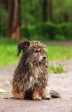 Stray dog. Close up of stray dog stock image
