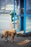 Stray dog. City stray dog near public phone Royalty Free Stock Image