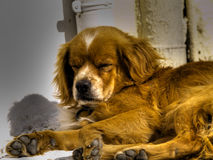 Stray dog. Resting in the sun Royalty Free Stock Photo