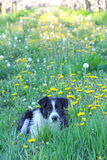 Stray dog in an apple orchard Royalty Free Stock Photography