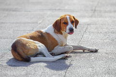 The stray dog. Basking in the sun Stock Images