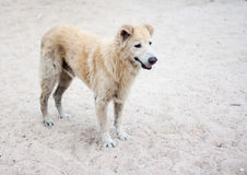 Stray dog on beach Stock Photos