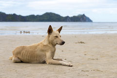 Stray Dog at beach Stock Photos