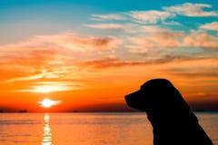 Stray dog at sunset. Stray dog on the beach at sunset stock photo