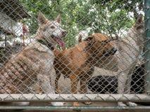 Stray dog behind cage Royalty Free Stock Photo