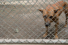 Stray dog behind cage  in Foundation. Stock Images