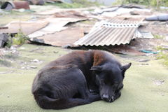 Stray dog. Black and brown stray dog laying down. Rubbish in background Stock Photo