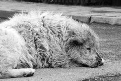 Stray dog. In Bucharest - Romania Stock Photo