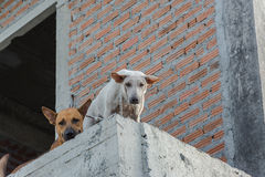 The stray dog. On a building under construction stock image