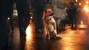 A stray dog in the city. Night on the street. The indifference of people royalty free stock images