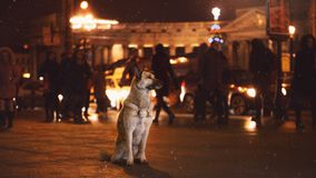 A stray dog in the city. Night on the street stock images