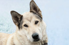 Stray dog Stock Image