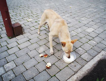 Stray dog eats Royalty Free Stock Photos