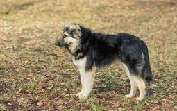 Stray dog exterior Royalty Free Stock Photos