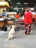Stray dog at food market, Buriram, Thailand. Beg for some food, poor dog, pitiful life, pathetic animal Stock Photos