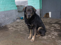 Stray dog hide from the rain Royalty Free Stock Images