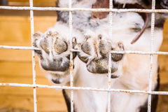 Stray dog holding paws on cage Royalty Free Stock Images