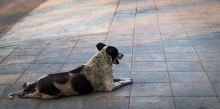 Stray dog. Homeless dog are staring relax on footpath walkway stock image