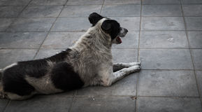 Stray dog. Homeless dog are staring relax on footpath walkway stock photos