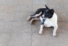 Stray dog. Homeless dog are staring suspiciously at something Royalty Free Stock Images